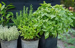 Klik hier voor meer mogelijkheden, foto's en informatie over de culinaire tuin »